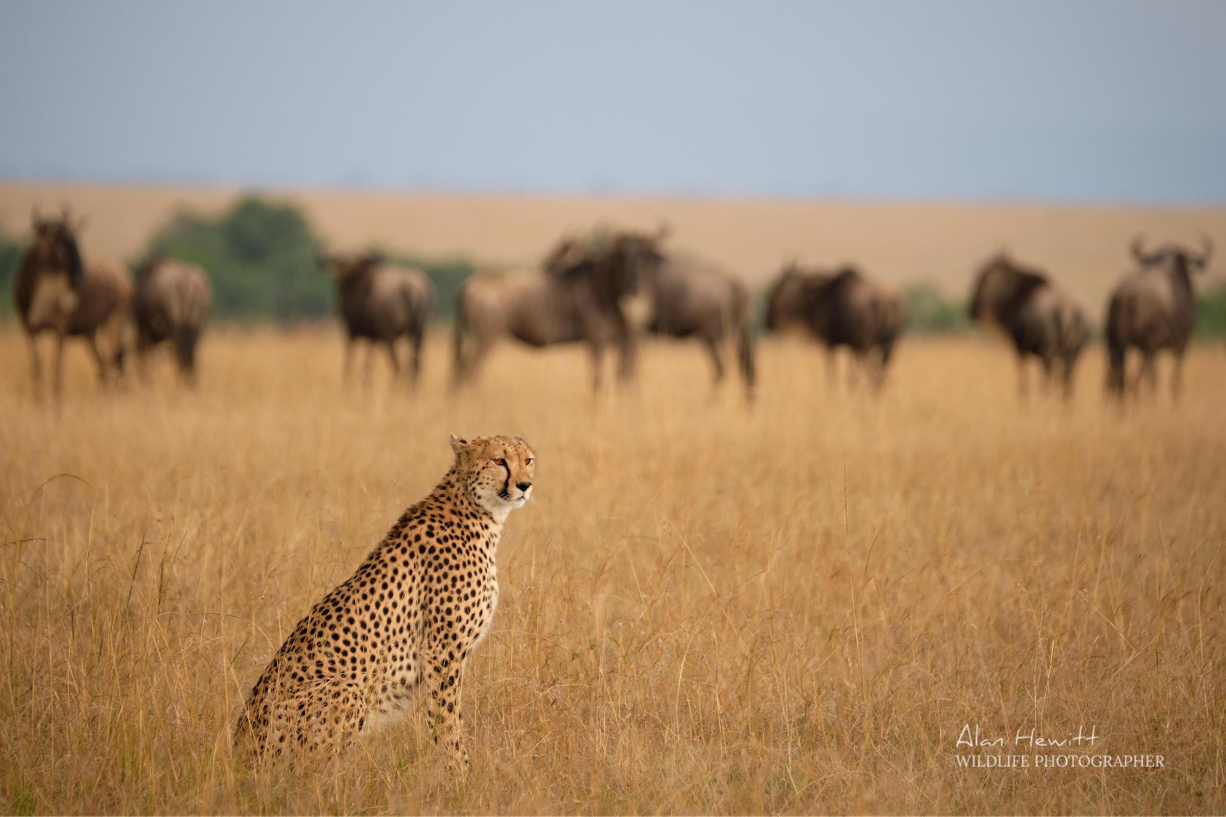 African Photography Safaris Alan Hewitt and Kaleel Zibe