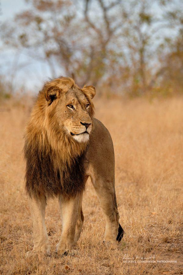 African Photography Safaris