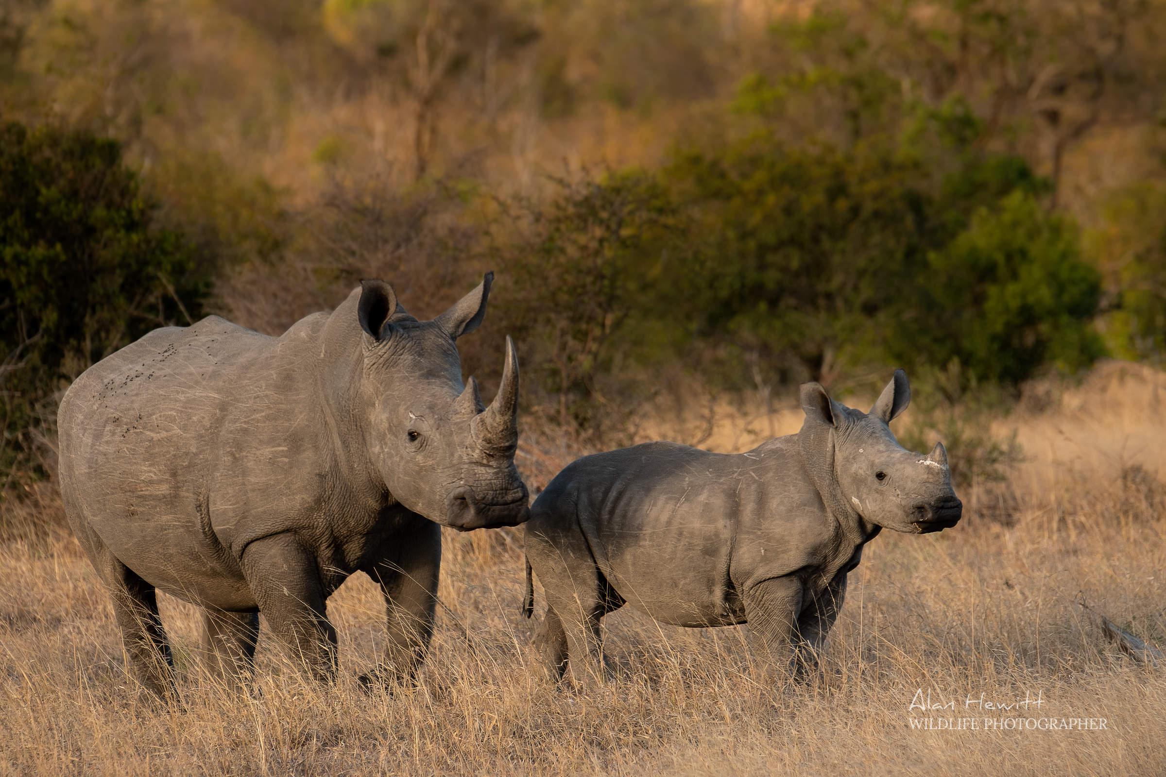 African Wildlife Photography Safaris Alan Hewitt and Kaleel Zibe